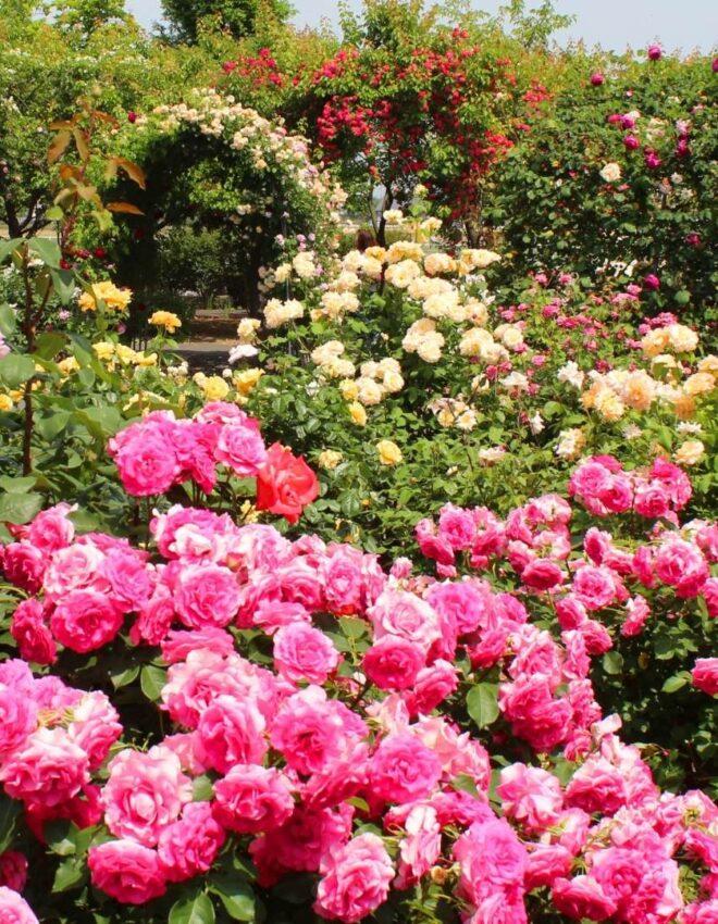Orti botanici e sontuosi giardini fioriti